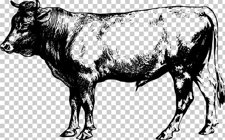 Angus Cattle Beef Cattle PNG, Clipart, Angus Cattle, Animals, Beef.
