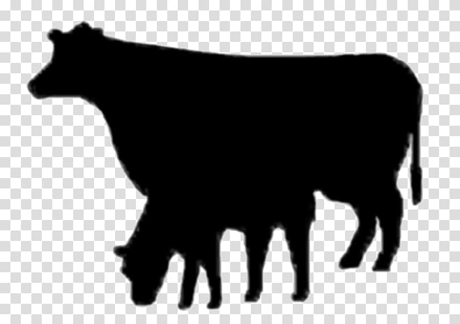 Angus cattle Dairy cattle Beef cattle Bull Ox, Rr.