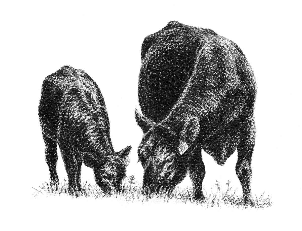 Registered Black Angus of LEE County.