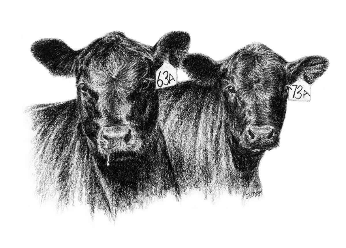 Cow silhouette angus clip art 3.