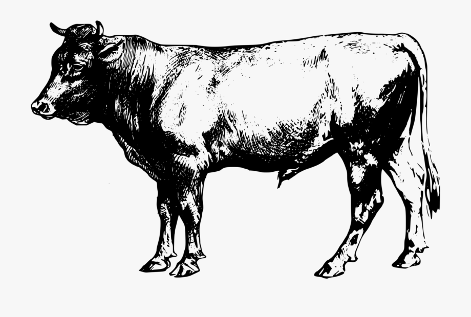 Cattle Clipart Angus Cattle.