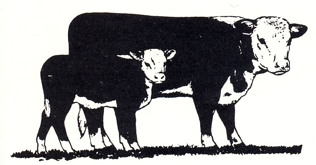 Nobby Angus Cattle Clipart Tasty Free Hereford Cow Cliparts Download.