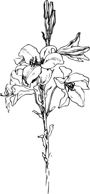 Ant Clip Art Download.