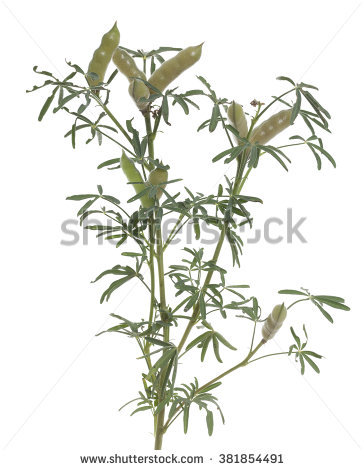 Bamboo Branches Vectorized Oriental Style Brush Stock Vector.
