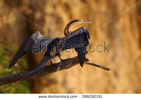 Snakebird Banco de Imagens, Fotos e Vetores livres de direitos.