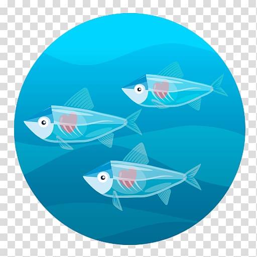 Comomola Tap Tap Ocean Porpoise Animal Marine biology Ewan.