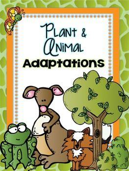 Plant and Animal Adaptations.