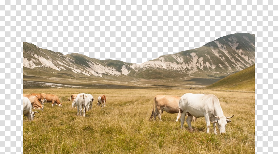 pasture herd grassland grazing horse clipart.