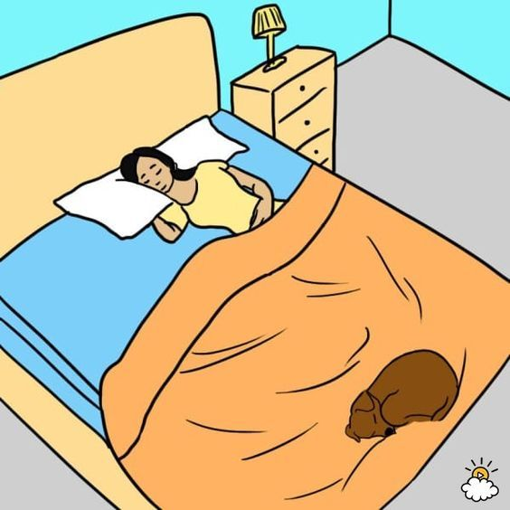 7 Surprising Reasons Your Dog Should Sleep On Your Bed Every.