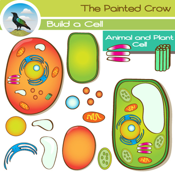Animal Cell & Plant Cell Clip Art.