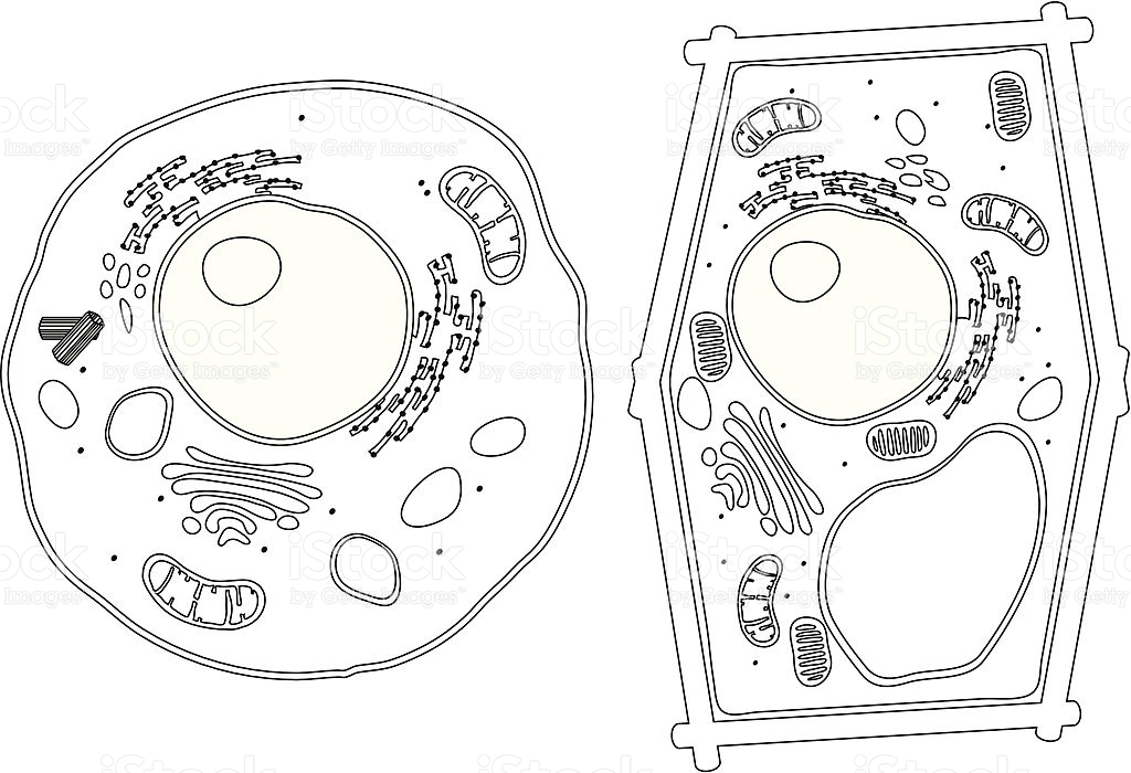 Plant Cell Clipart Black And White.