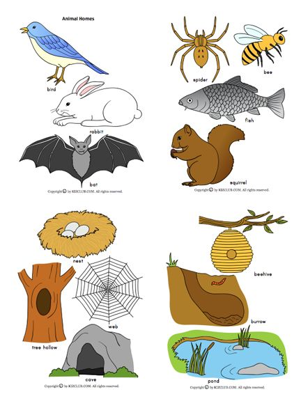Here\'s a large set of pictures of animals and their homes.