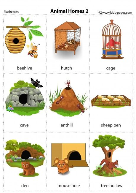 Animal Homes 2 flashcard.