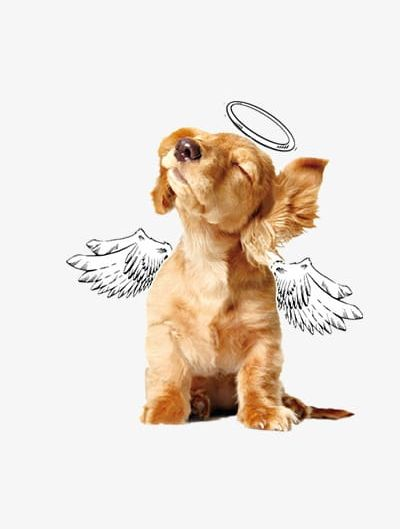 Angel Dog PNG, Clipart, Angel, Angel Aura, Angel Clipart.