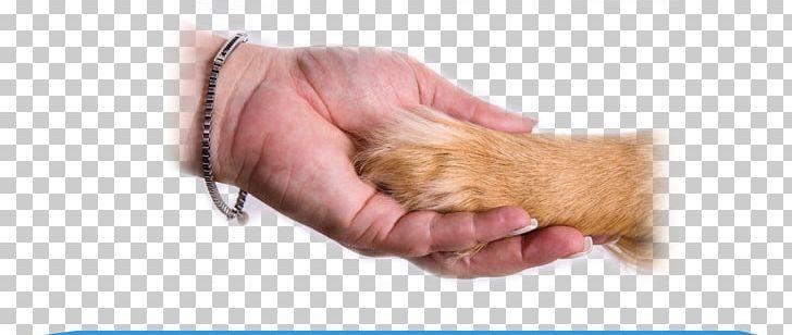 Dog Animal.
