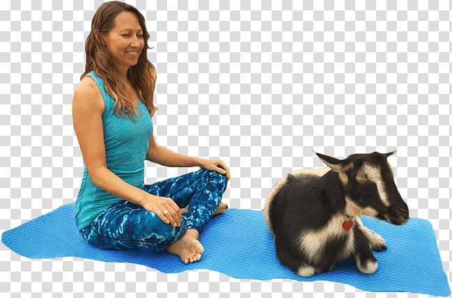 Goat Yoga instructor Pet Animal.