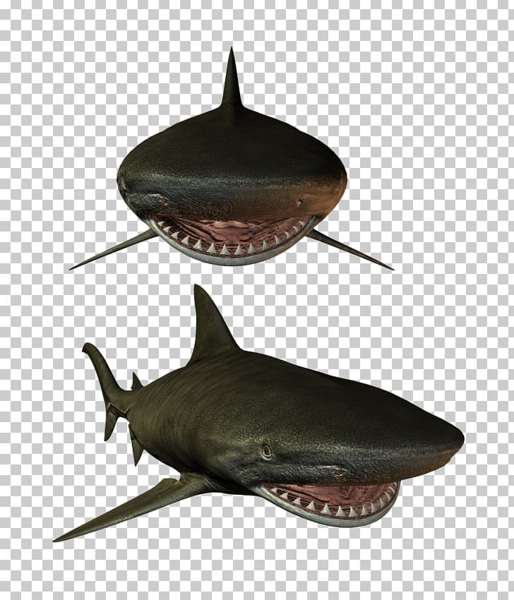 Shark Fish Marine Biology PNG, Clipart, Animal, Animals, Audio Video.