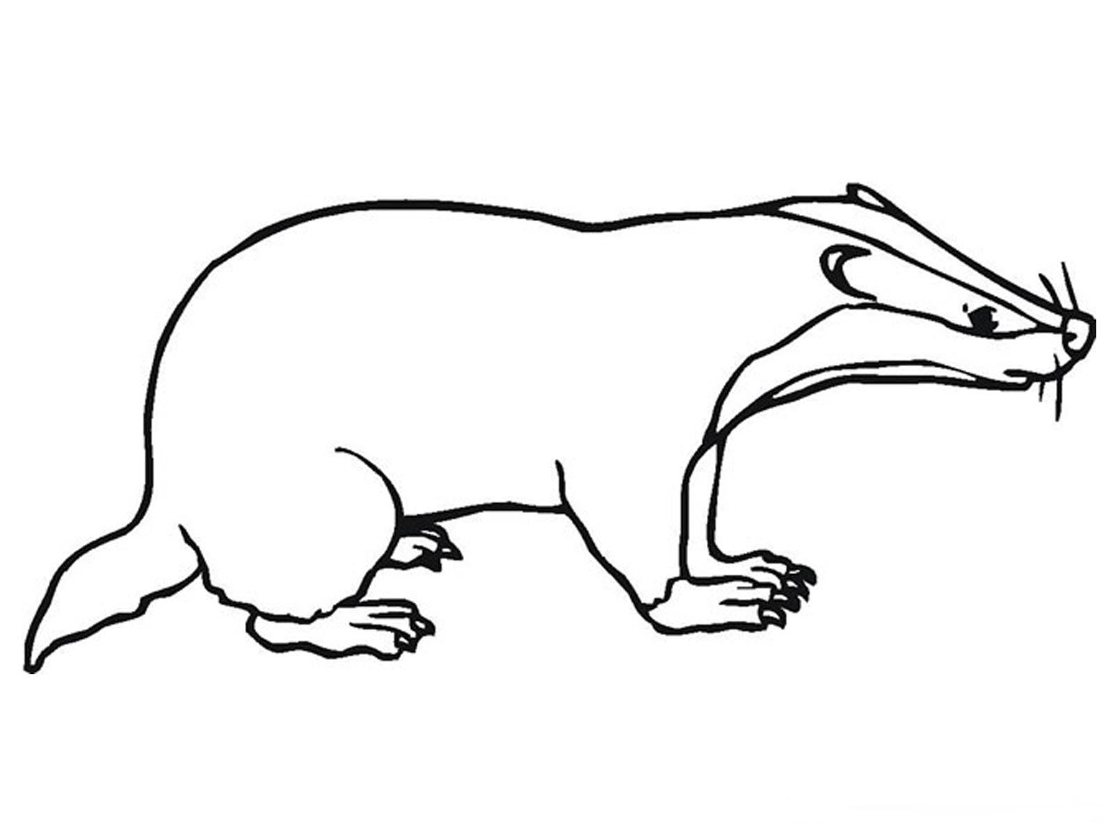 Free Badger Clipart Black And White, Download Free Clip Art.