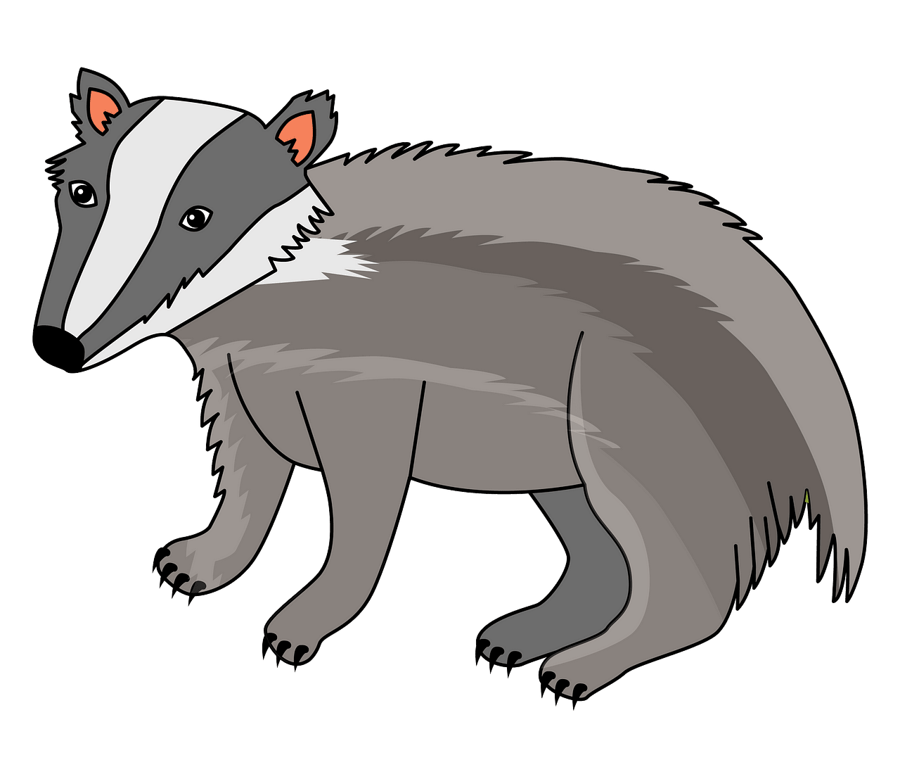 Badger clipart. Free download..