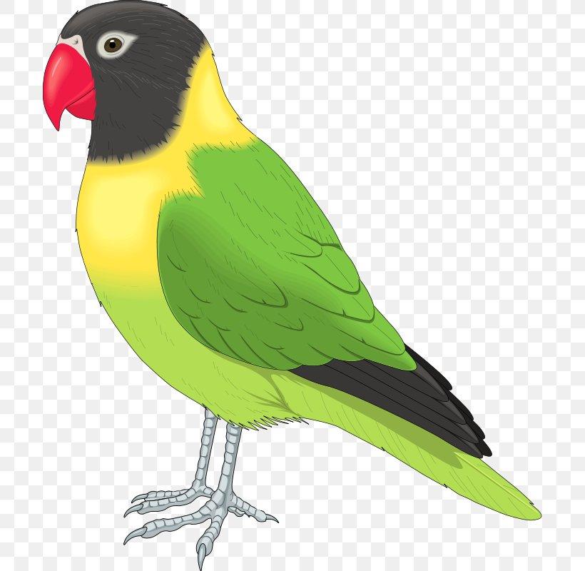 Bird Clip Art, PNG, 700x800px, Bird, Beak, Budgerigar.