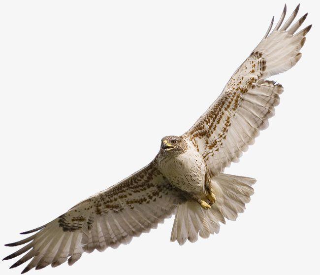 Eagle Wings PNG, Clipart, Animal, Birds, Eagle, Eagle.