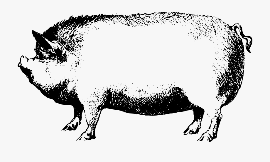 Face Pig Clipart Pig Animal Clip Art Downloadclipart.