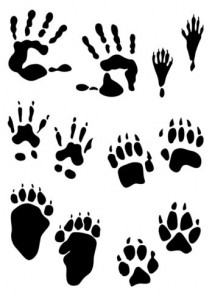 Animal Blessing Clipart.