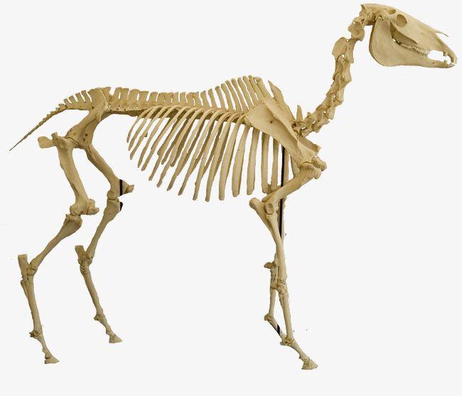 Animal Bones PNG, Clipart, Animal, Animal Clipart, Animal.