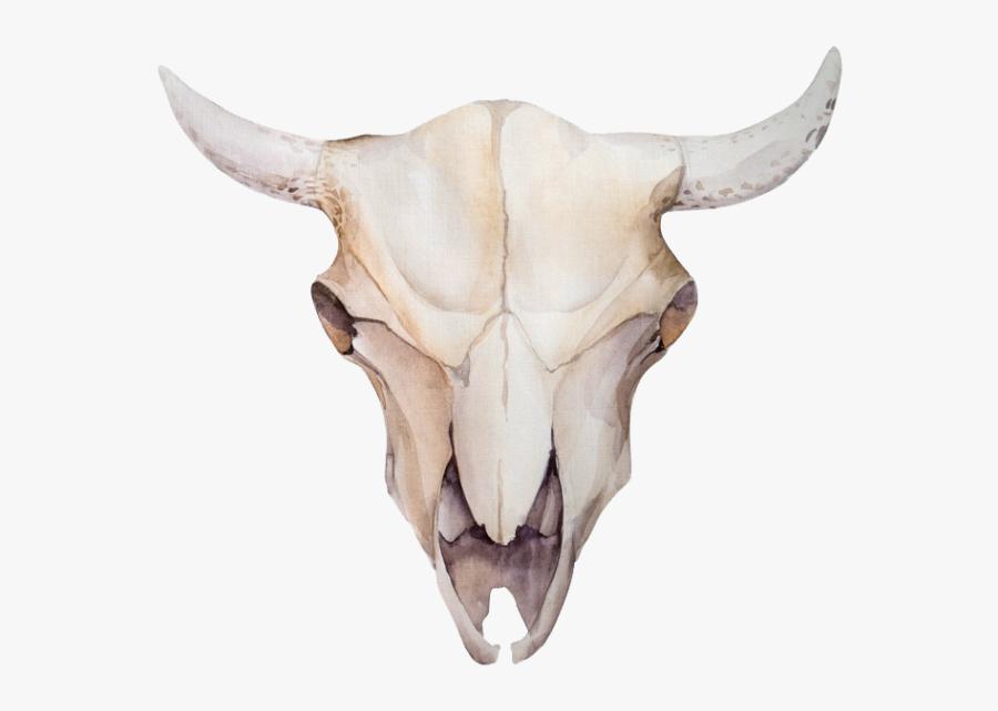 Animal Skulls Skeleton Bone.