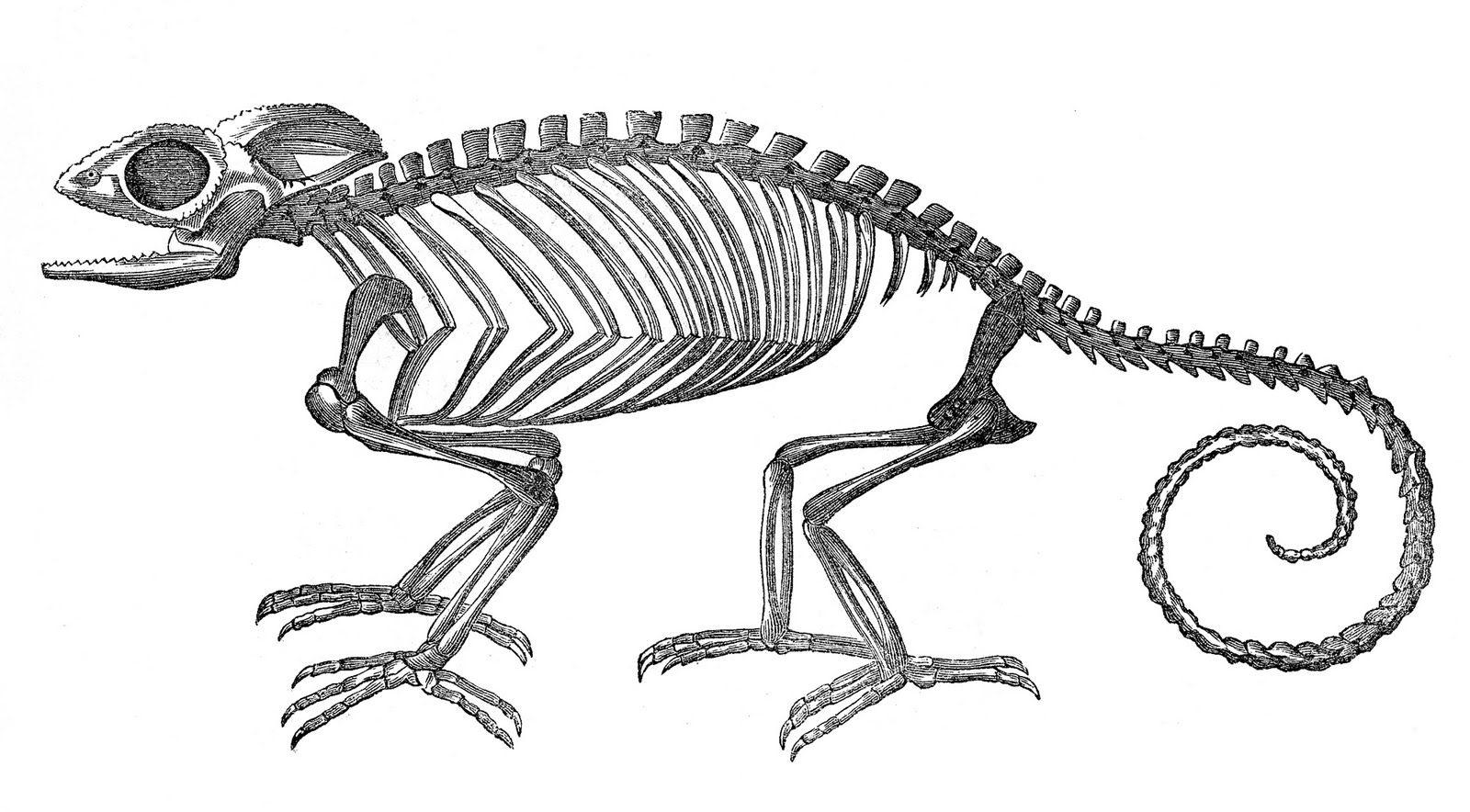 7 Halloween Animal Skeleton Clipart!.