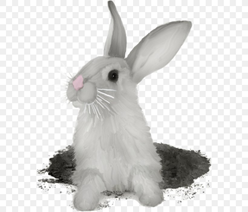 Hare Domestic Rabbit Rex Rabbit, PNG, 580x699px, Hare.