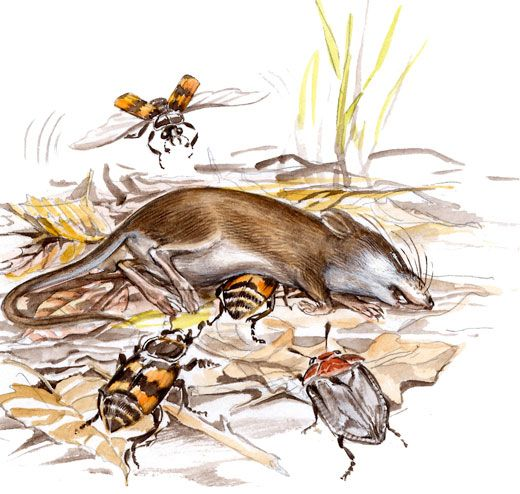 Burying beetles raise their young on the carcasses of dead.