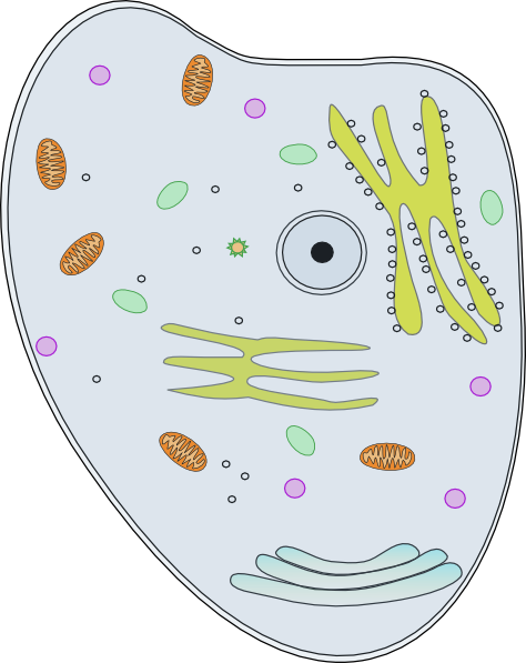Clip Art Of Human Cells Clipart.