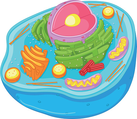 Free Animal Cell Cliparts, Download Free Clip Art, Free Clip.
