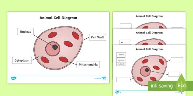 Animal Cell Diagram Worksheet.