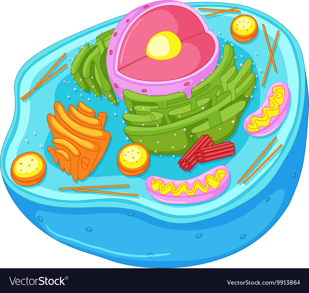 Close up diagram of animal cell.