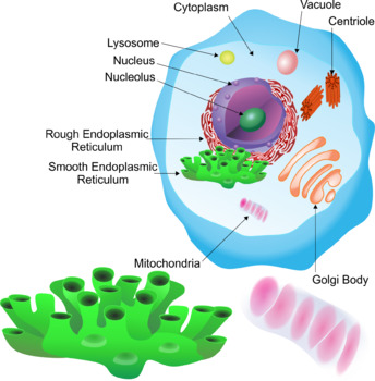 Animal Cell Parts Clip Art.