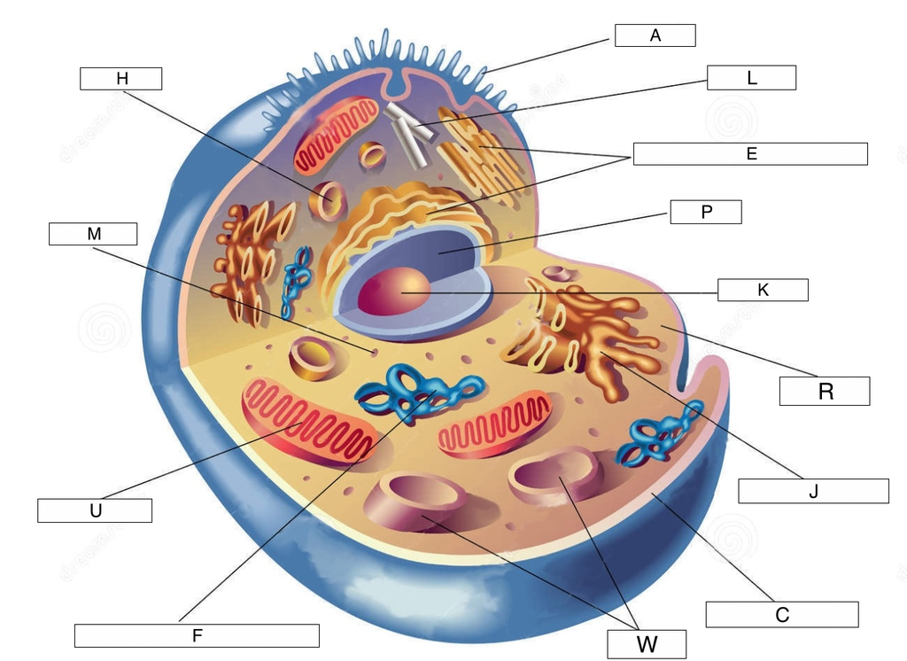 Animal Cell Parts: Images Diagram.