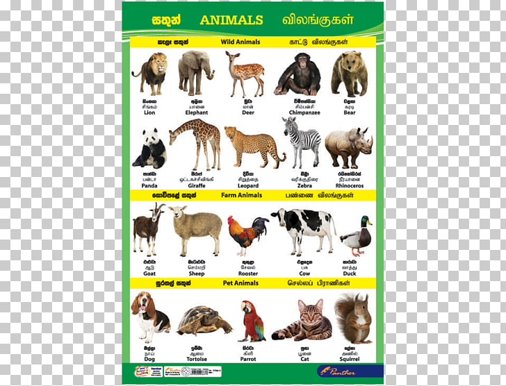 Dog Sri Lanka Cat Animal Chart, catalog charts PNG clipart.