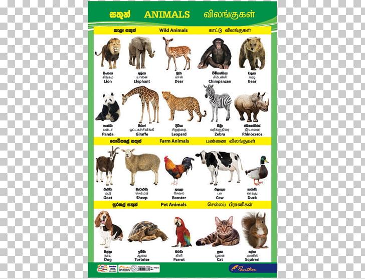 Dog Sri Lanka Cat Animal Chart, catalog charts PNG clipart.