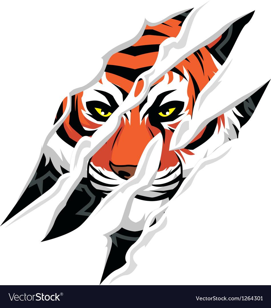 Tiger claw mark.