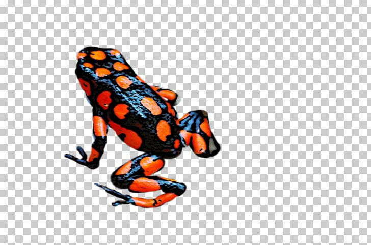 Toad Tree Frog PNG, Clipart, Amphibian, Animal, Animal.