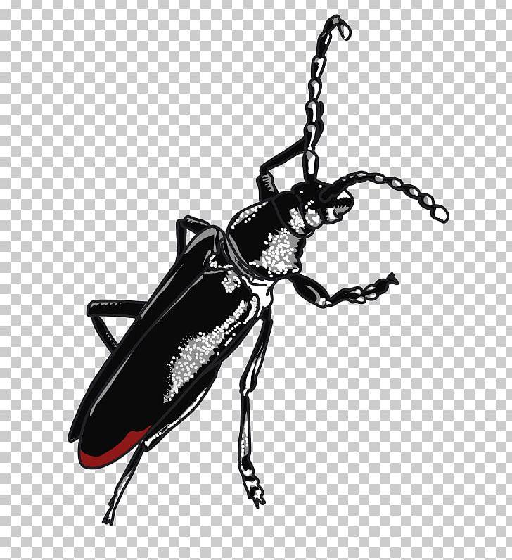 Beetle Cerambyx Cerdo PNG, Clipart, Animal, Animals.