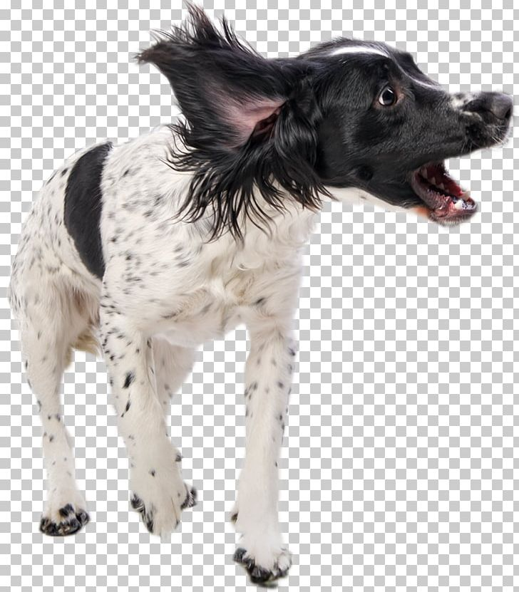 Dog Stock Photography Getty S PNG, Clipart, Animals.