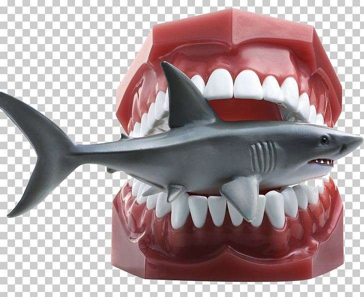 Shark Getty S Stock Photography PNG, Clipart, Animals, Big.