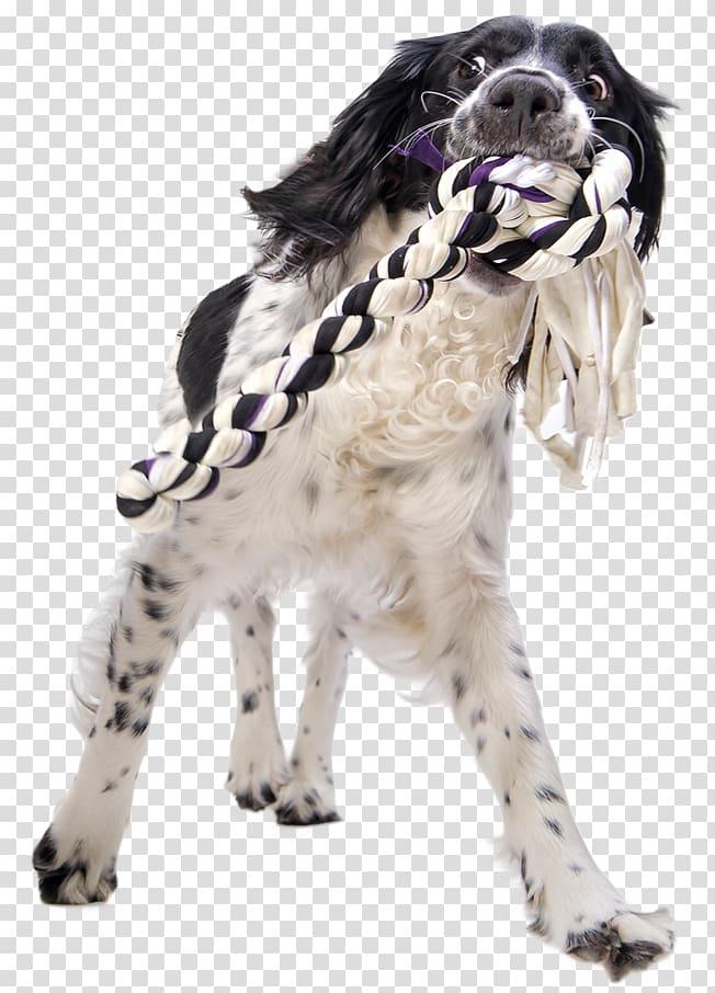 Dog Getty s, play firecracker puppy transparent background.