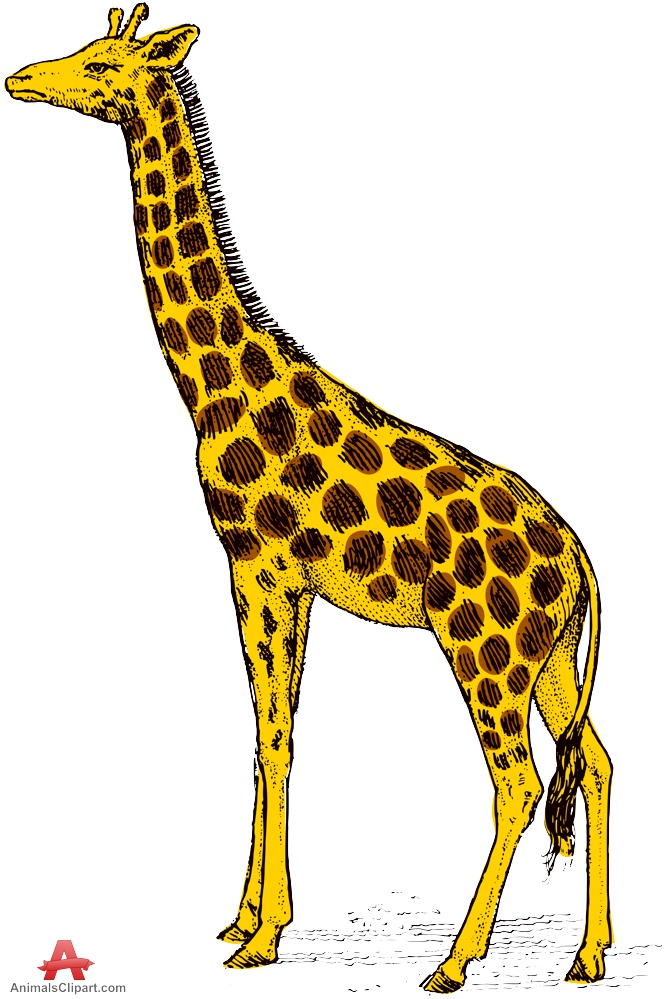 Animals clipart of giraffe with the keywords.