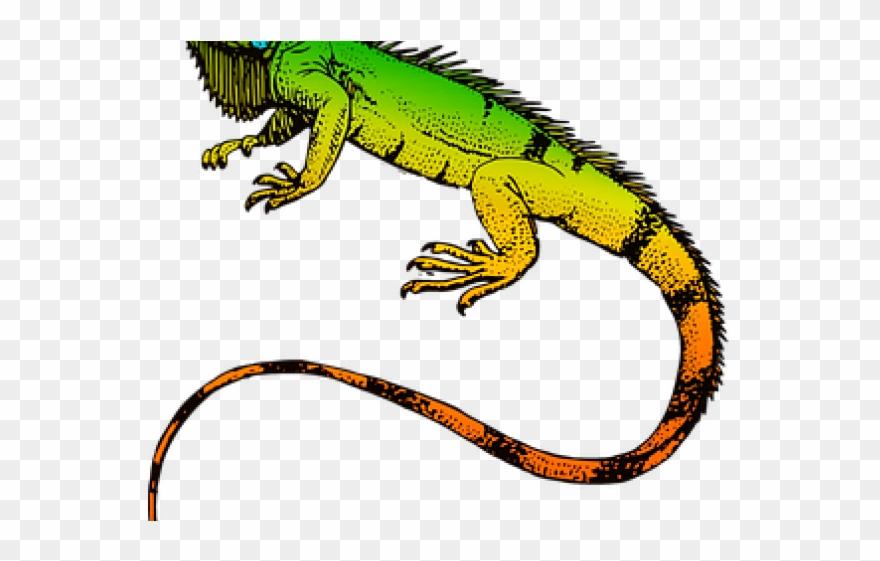 Iguana Clipart Wild Animal.