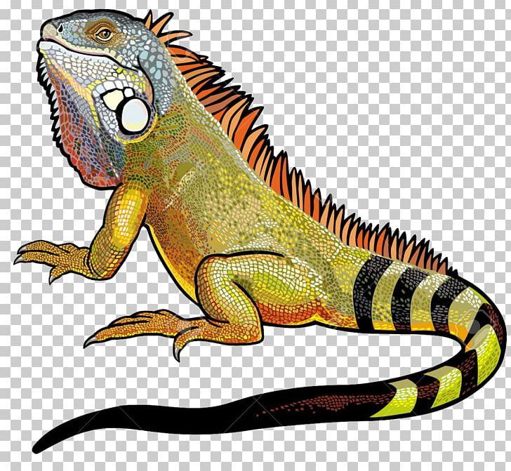 Green Iguana Lizard PNG, Clipart, Amphibian, Animals, Blue.
