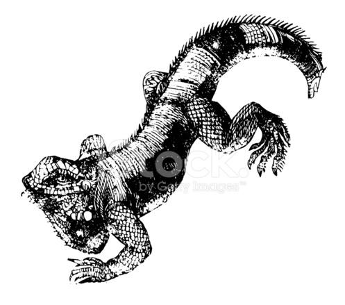 Ilustração DE Lagarto Iguana.